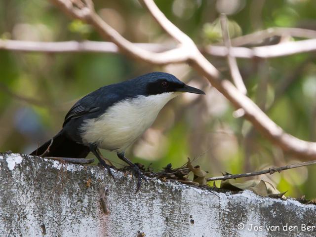 Vogels Guatemala