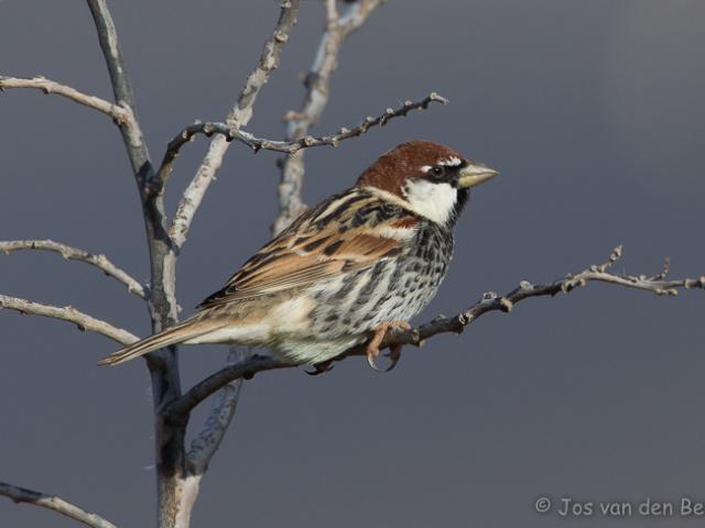 Vogels Spanje