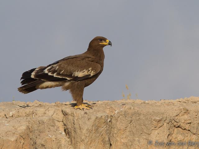 Vogels Oman