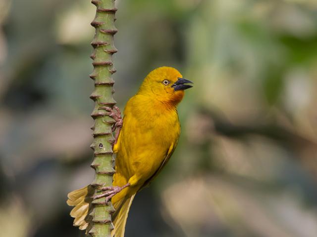 Vogels Namibië