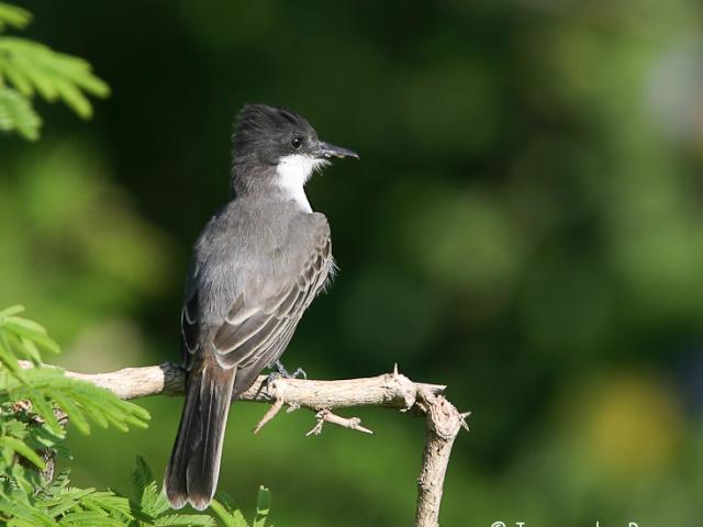 Vogels Cuba
